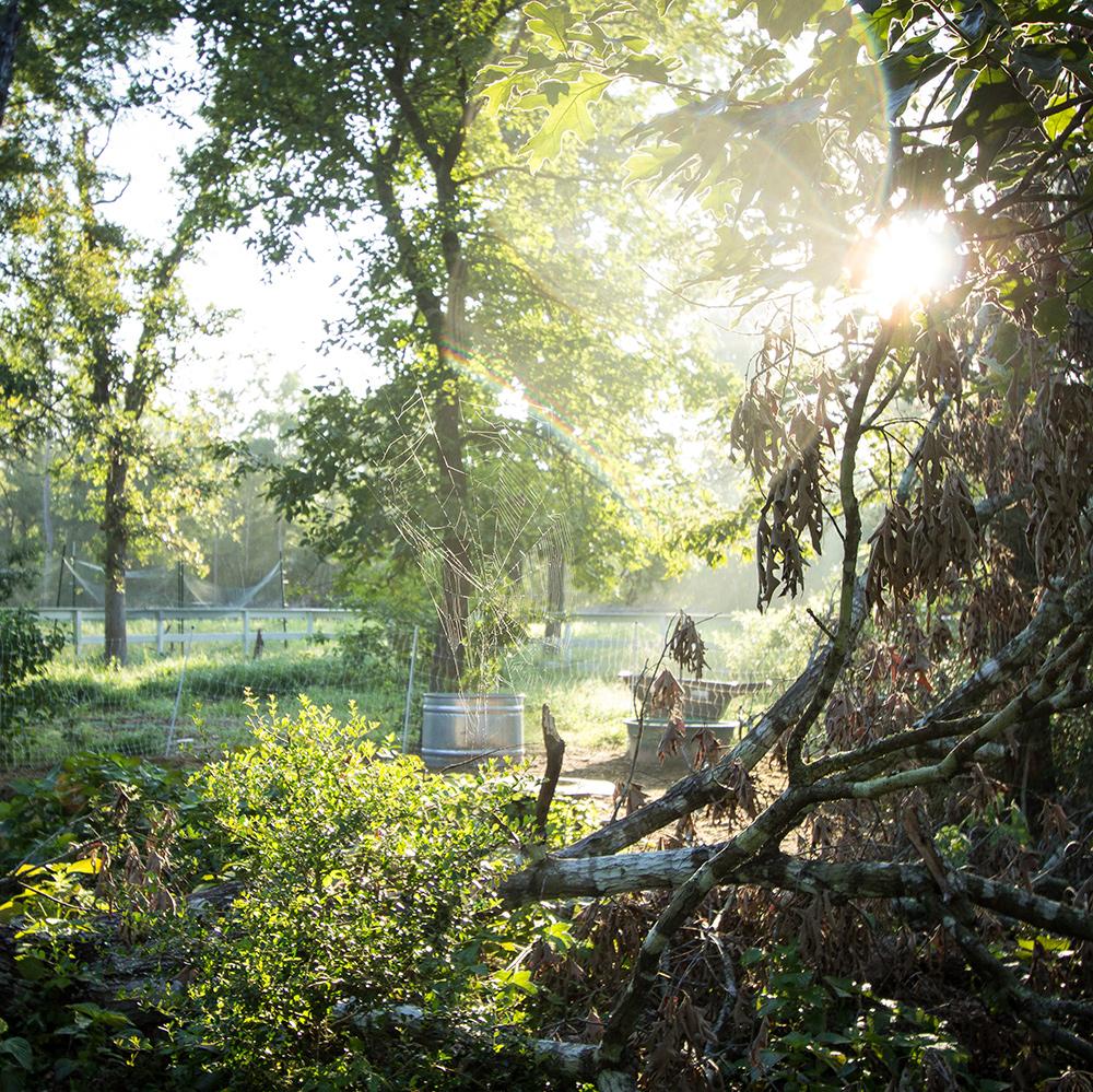 Trees-on-Farm